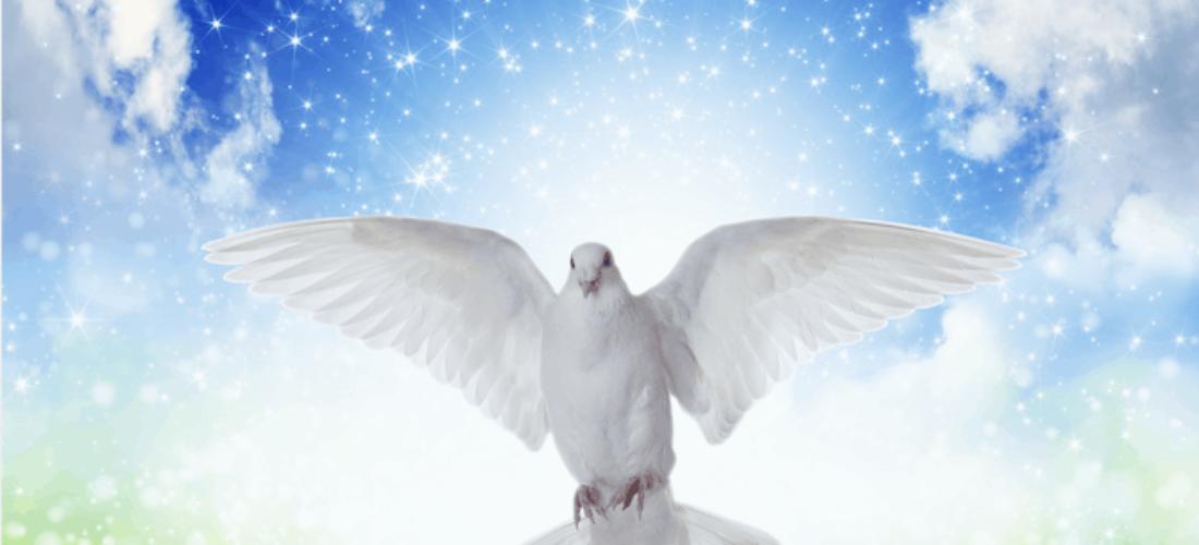 La Vida y la Muerte, Enseñanzas de un Adiós
